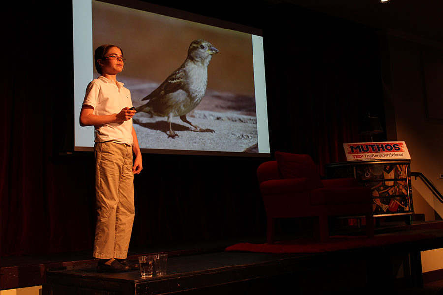 Seventh+grader+Jakob+Kroll+delivers+his+talk+about+the+importance+of+songbirds+to+our+ecosystem.