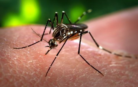 Is Zika More Dangerous Than We Think?